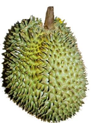 Een durian, in het echt is ie veel groter